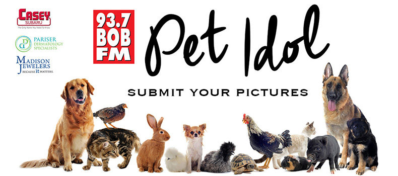 Submit Your Pet Idol Pictures