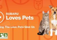 Casey Subaru LOVES PETS!